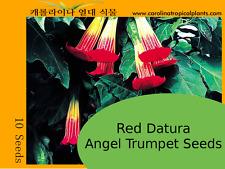Red Datura Angel Trumpets Seeds - 10 Seeds