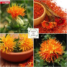 10 AMERICAN SAFFRON ORGANIC SEEDS (Carthamus tinctorius); Edible flower