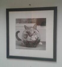 PHOTOGRAPH Art Photo Humorous Cat Photo