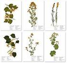 Herbarium 5 Pflanzen frei wählbar aus 140 Pflanzenarten. J 2021 Top