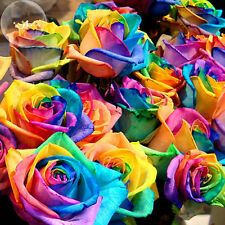 600pcs Rare Rainbow Rose Flower Seeds Home Garden Valentine Bonsai Plant Potted