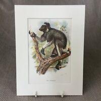 1896 Antik Affe Aufdruck Endrina Primaten Tiere Original 19th Century