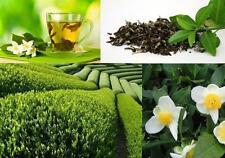 1 Plant de Thé Vert Plante Plant Arbuste pour Terrasse Jardin Balcon Pot TRABZON