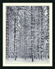 "Ansel Adams,"" Pine Forest in Snow"",  Framed Art, 33x27"
