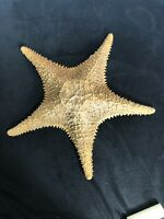Vintage Beautiful Real Dried Starfish Large 12""