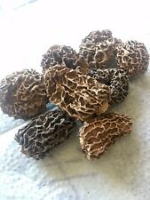 50g Grams Mushroom Black Truffle Dry Film Free Shipping
