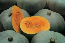 Pumpkin WHANGAPARAOA CROWN-Pumpkin Seeds-NEW ZEALAND BEAUTY- 20 CHUNKY SEEDS.