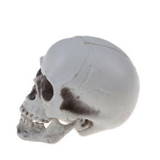 Mini Human Skull Decor Prop Skeleton Plastic Head Halloween Coffee Bar VJ