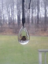 Real Spider Pendant Necklace in Clear Drop Resin Spiny Backed Orbweaver