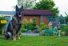 Kerbl 441151 Elektrogartenzaun für Haustiere Hund Katze inkl. Batteriegerät B40