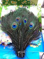 US 100pcs 10-12 Inches High Quality Real Natural Peacock For Makeup Tool