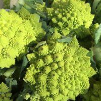 Cauliflower Trevi  - Brassica oleracea - 270 seeds