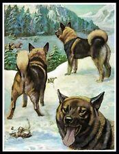 NORWEGIAN ELKHOUND DOGS IN WINTER SCENE VINTAGE STYLE DOG ART PRINT POSTER