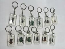 Insects Crystal Clear Keychain 12 Pcs