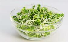 Alfalfa Sprouting Microgreens  NON GMO  Seeds Organically Grown 400 Seeds 1 gram