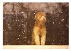 Bearded Collie Beardie Christmas Cards from Palm Press - Box of 10^