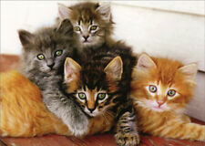 Four Kittens Snuggling Avanti Birthday Card from Group