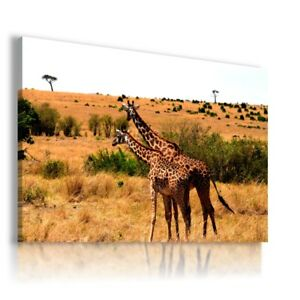 AFRICA GIRAFFE Wild And Domestic Animals Canvas Wall Art Picture  AN258 X MATAGA