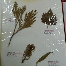 Botanical Study Pressed Leaf Collection Oregon 1986 Field Tree History Pacific