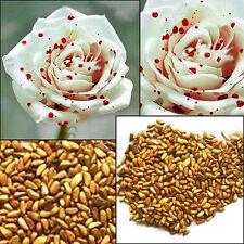 200 White Drop Blood Rose Seeds Garden Bonsai Flower Romantic Decoration Plant