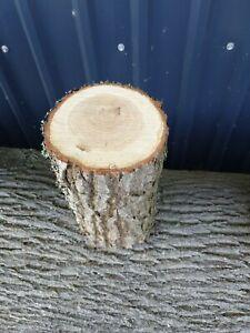 Baumstamm Baumscheibe EICHE 30 hoch 19cm dick Holzscheibe Deko
