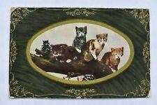 Postcard Kittens on Tree Branch Posted Postmark 1909 Raphael Tucks Kittendom