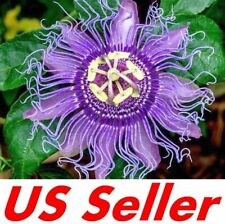 20 Seeds Passion Fruit Flower Seeds E104.2, Passiflora Tropical Climbing Exotic
