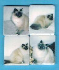 FEV017 - FÈVES Série Complète Chats