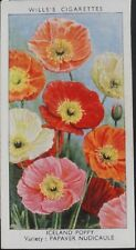 No.24 ICELAND POPPY Garden Flowers by Sudell - W.D.& H.D. Wills 1939
