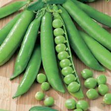 Green Arrow English Pea Seeds | Organic Non GMO USA Garden Vegetable for 2021