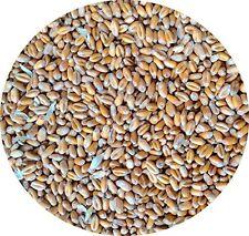Weizen, Geflügelfutter, Hühnerfutter, !!Mühlenqualität!! GVO-frei 25 kg