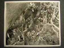 1947 Cheta Tarzan And The Huntress VINTAGE PHOTO 547f