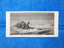Gravure Année 1863 - Un morse cherchant à escalader l'ilot de glace - Tricheco