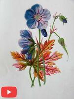 Botanical prints lot x 5 beautiful old color images c.1880-90's Apple Crane's-Bi