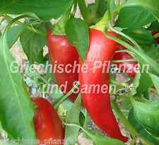 ANAHEIM riesen-chili PAPRIKA 10 Semillas Medio picante 20CM LARGO frutos