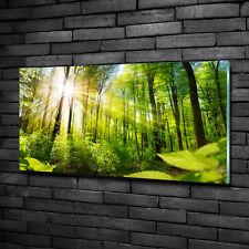 Glas-Bild Wandbilder Druck auf Glas 100x50 Deko Landschaften Wald in der Sonne