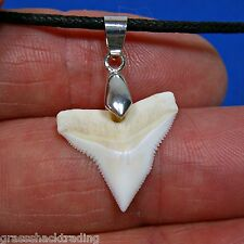 "3/4"" (19mm) White Bull Shark Tooth Adjustable Necklace Great Sharks Teeth"