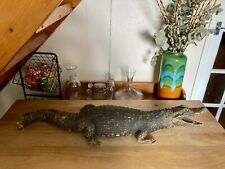 More details for taxidermy 19th century crocodile/alligator - large 104cm long
