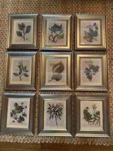 Green Floral Botanical Study Framed Wall Art Prints Set Of 9 ~ Uttermost 33497