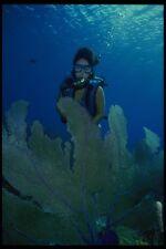 156000 Scuba Diver With Caribbean Sea Fans A4 Photo Print