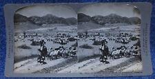 Palestine Plain of Jericho Livestock Mt Temptation Stereo Travel Co. Stereoview