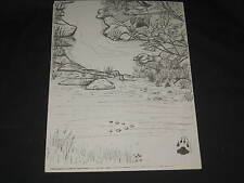 Kevin Fitzgerald 12 Pen and Ink Nature Drawings   eb13