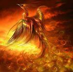 Phoenix's Closet