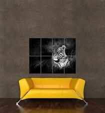 Impression photo poster géant nature Big Cat Tigre du Bengale noir, blanc assis pamp021