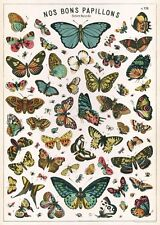 Butterflies Nos Bons Papillons Poster Cavallini & Co 20 x 28 Wrap Butterfly
