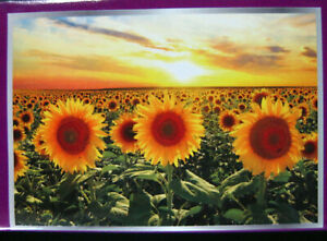 Blooming Sunflowers Nature 300 Piece Jigsaw Puzzle 19 x 13 in NEW