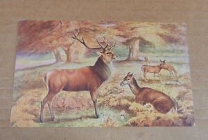 Postcard Animals Red Dear in the Forest posted 1929  xc4