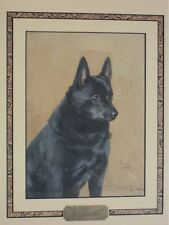 Magnificent Schipperke dog Painting, Reuben Ward Binks