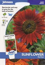 Johnsons Seeds - Pictorial Pack - Flower - Sunflower Red Sun - 40 Seeds