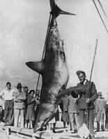 Mako Shark On Rod And Reel 1943 OLD FISHING PHOTO